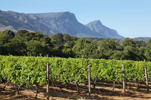vignobles de la vallée